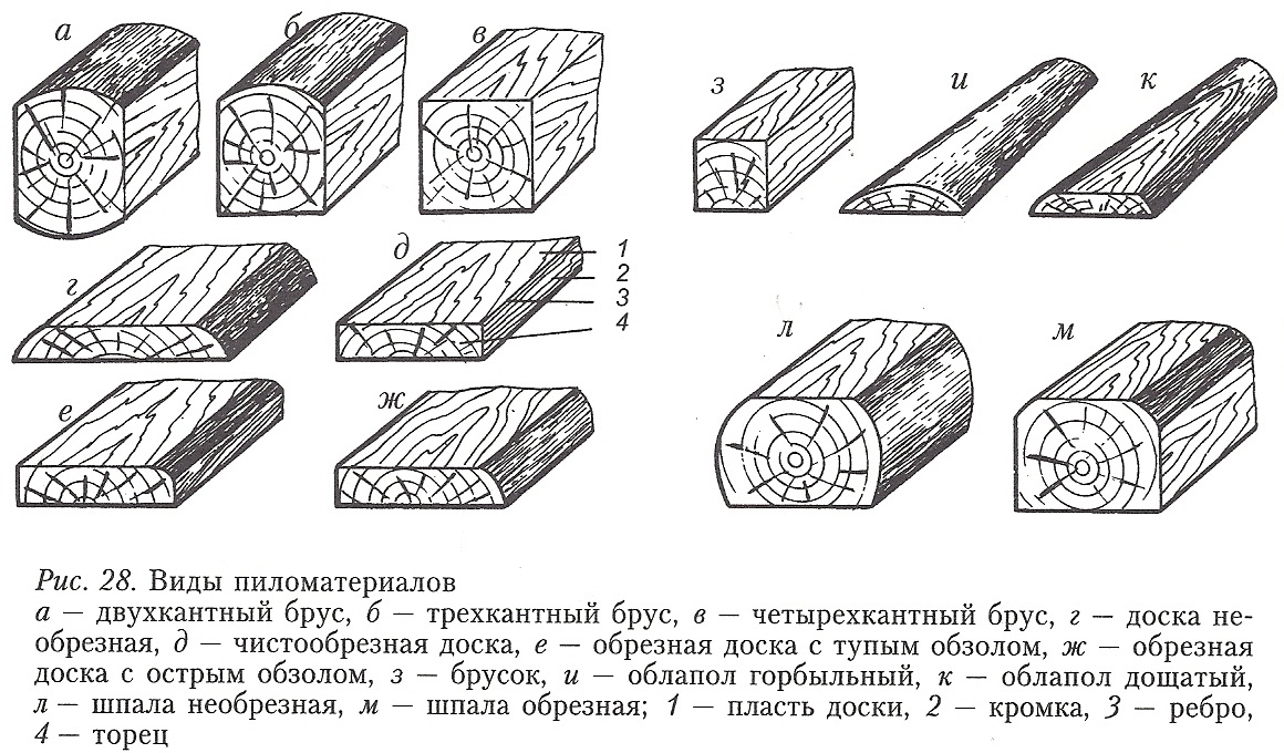 Породы древесины. Виды и свойства древесины.